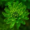 abstract-green-plant-35196.jpg